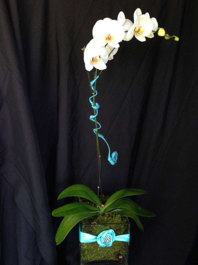 Orchid Plant by Special Occasions by Vicki